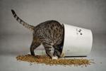 chat qui mange des croquettes.jpg